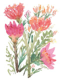 Proteas or Sugarbush- Vibrant Pink Art Giclee Print