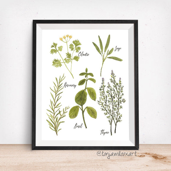 Culinary Herbs No. 1 - Giclee Art Print- Botanical Food Illustration