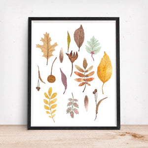 Fall Leaves and Seedpods, Autumn Colors - Art Print