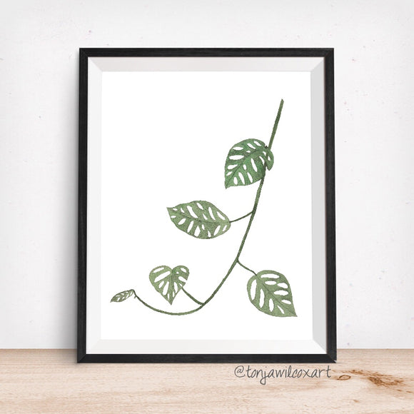 Monstera Adansonii Plant Leaves- Giclee Art Print- Botanical Swiss Cheese