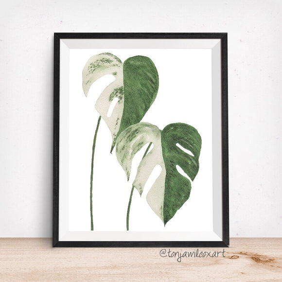 Monstera Variegata Plant Leaf- Giclee Art Print- Botanical