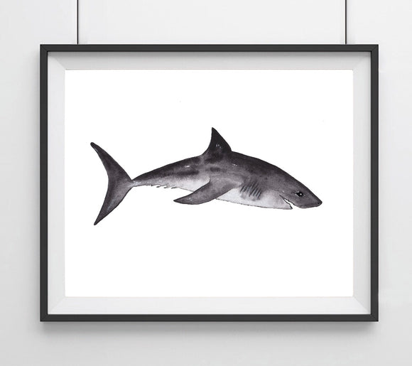 Sealife Series, Great White Shark- Art Print