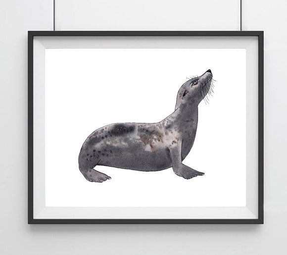 Sealife Series, Seal- Art Print