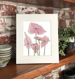 NEW Caladium- Pink Splash Plant W/ Pink & Green Variegated Leaves -Limited Edition  Giclee Art Print- Botanical Collection