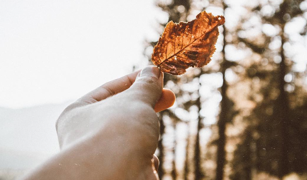Fall leaf picture via @dakotaashleymarie on Instagram