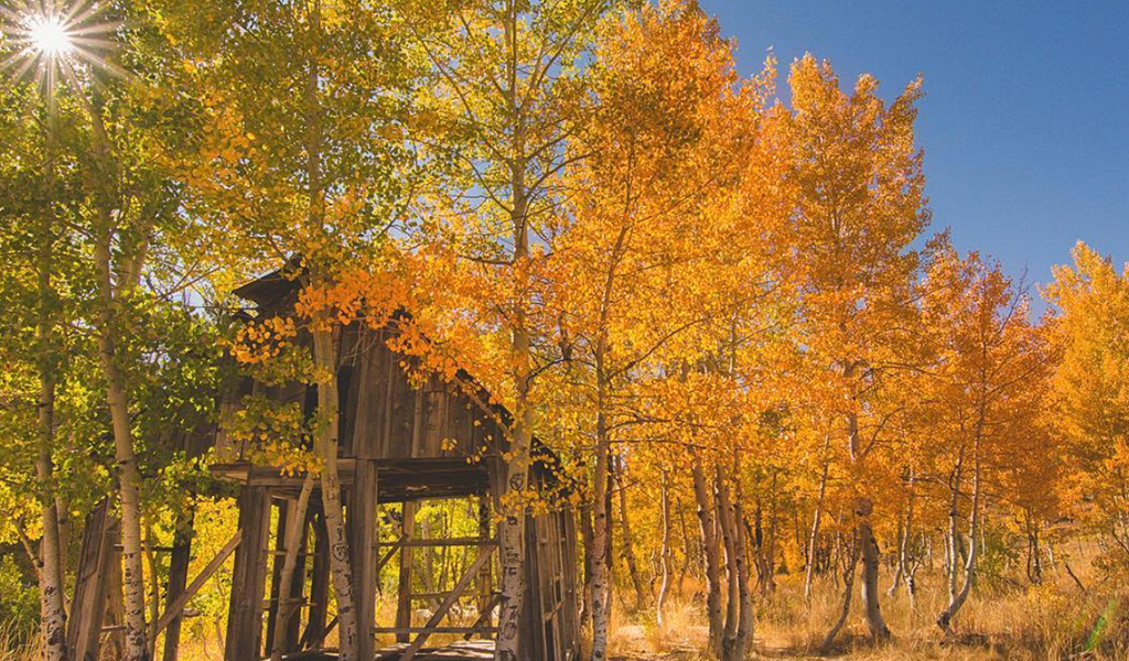 Photo of cabin among fall leaves via @paigeltennant on Instagram