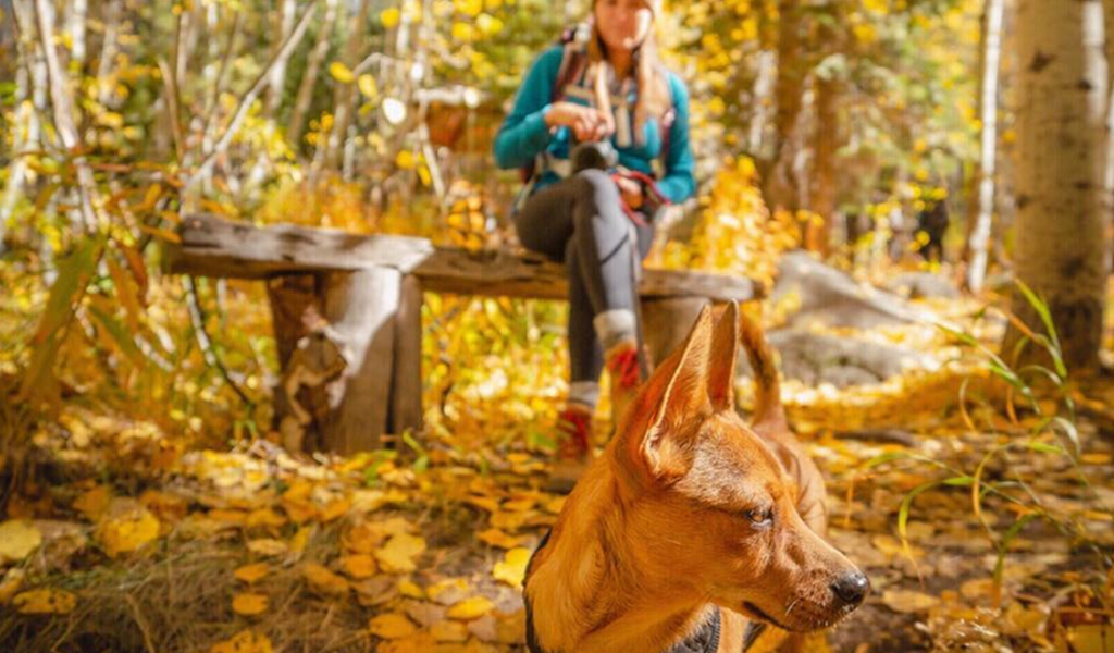 Dog and woman in fall leaves via @toreyphilipp Instagram
