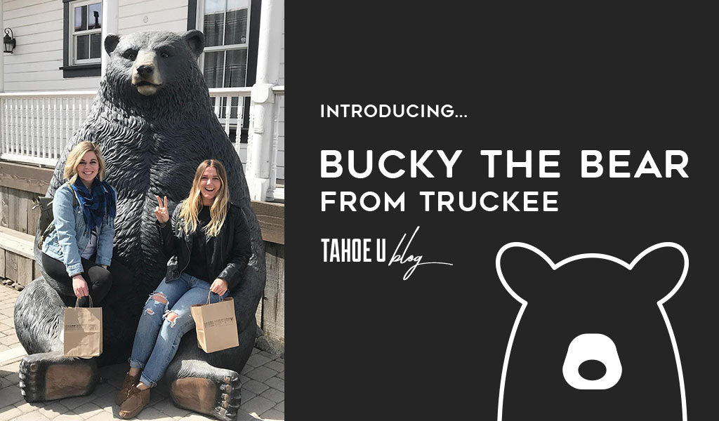 Introducing Bucky the Bear from Truckee at Tahoe University Bear Statue