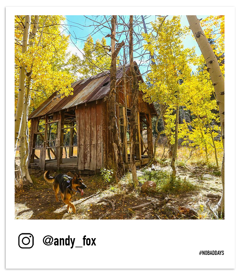 Abandoned cabin in the Sierra with fall foliage by @andy_fox
