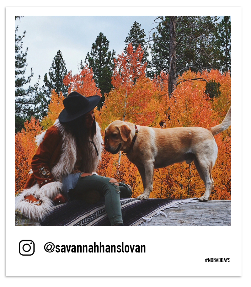 Fall leaves woman with dog on a fallen tree in Tahoe