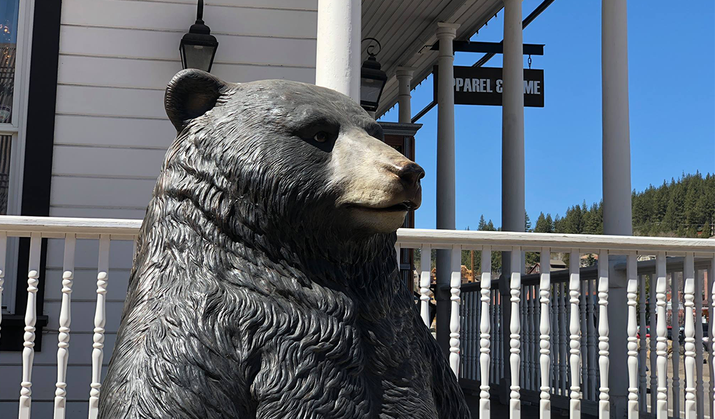 Bear photo opp at Tahoe University