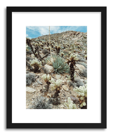Fine art print Hill Of Cholla by artist Kevin Russ