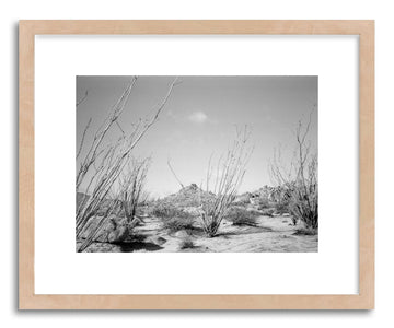 Hide - Fine art print Ocotillo Cacti by artist Kevin Russ in natural wood frame