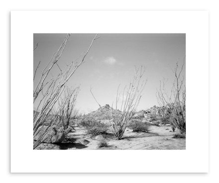 Hide - Fine art print Ocotillo Cacti by artist Kevin Russ on fine art paper