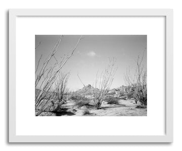 Hide - Fine art print Ocotillo Cacti by artist Kevin Russ in white frame