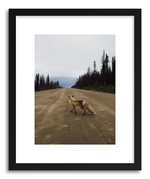Fine art print Road Fox by artist Kevin Russ