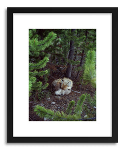hide - Art print Sleeping Fox by artist Kevin Russ in white frame