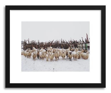 Fine art print Snowy Sheep Stare by artist Kevin Russ