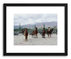 hide - Art print Wild Mexico Horses by artist Kevin Russ on fine art paper