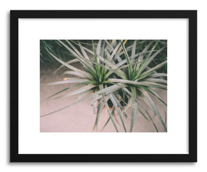 Art print Air Plant by artist Tina Crespo