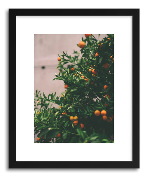 Fine art print Citrus Tree Fruit by artist Tina Crespo