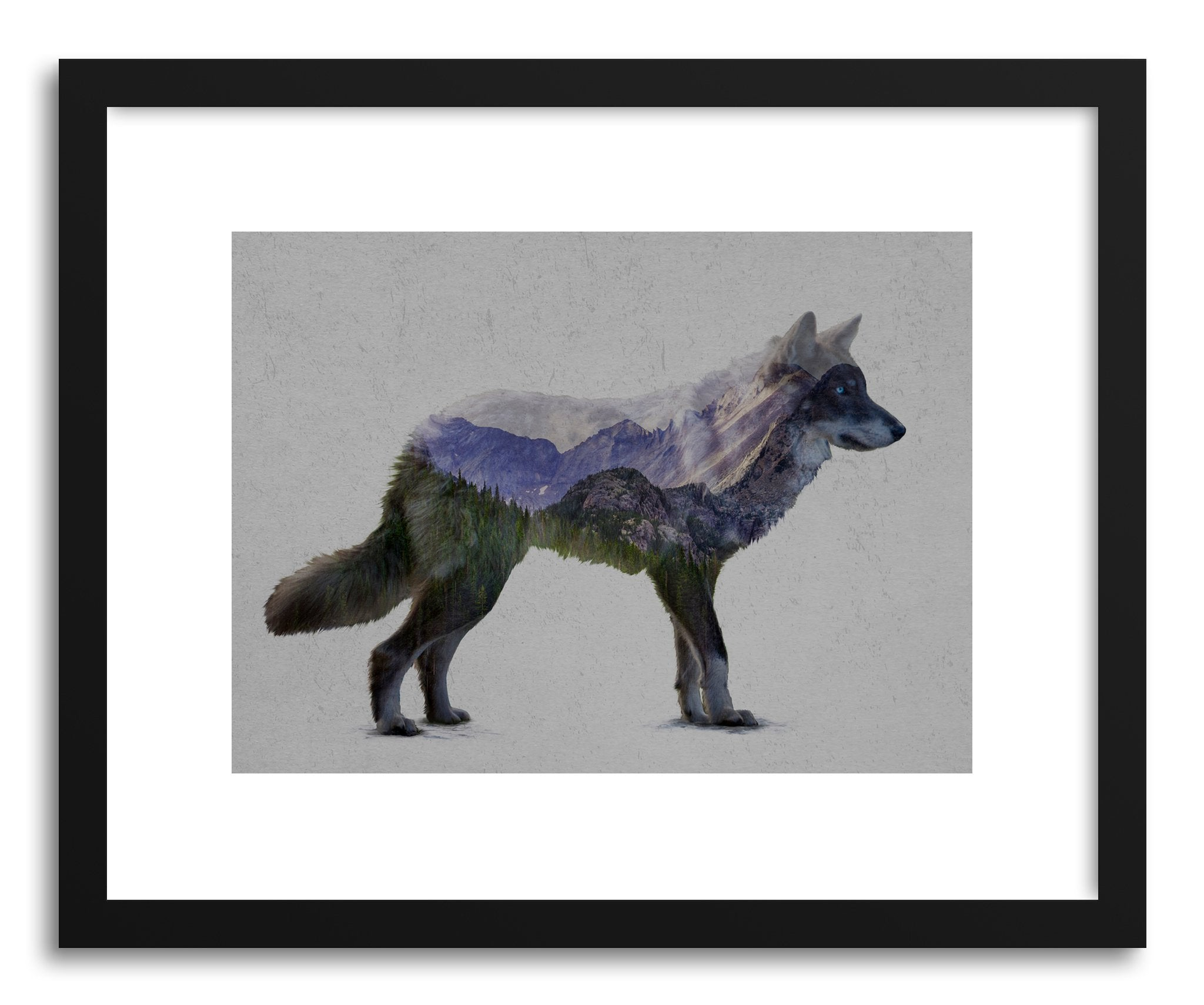 Fine Art Print The Rocky Mountain Gray Wolf Print By Artist David