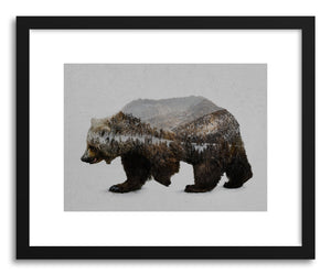Fine art print The Kodiak Brown Bear Print by artist David Iwane
