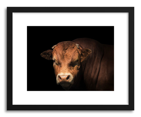 Art print Limousin Bull by artist By The Horns