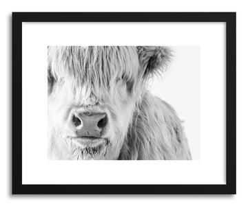 Art print White Highland Cow by artist By The Horns