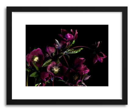 Art print Hellebore by artist By The Horns