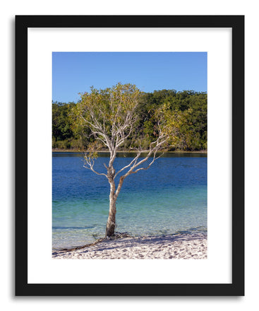 Fine art print Makenzie Tree by artist Wes Lewis
