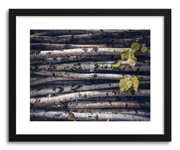 Fine art print Black and White Birch by artist Wes Lewis