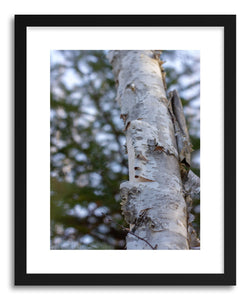 Fine art print Winter Birch by artist Wes Lewis