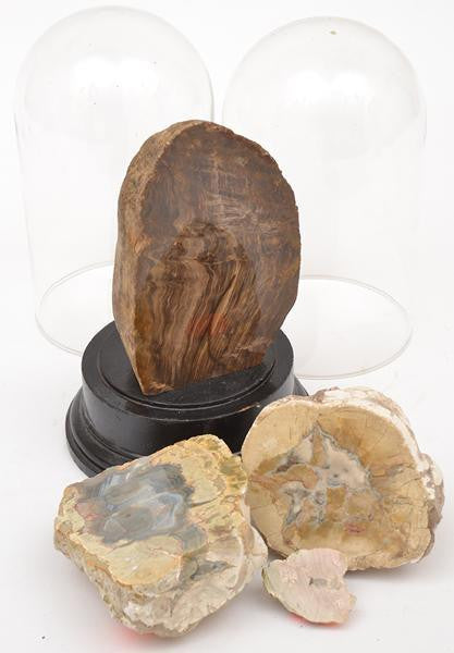 A Collection of Mineral Specimens with Glass Domes