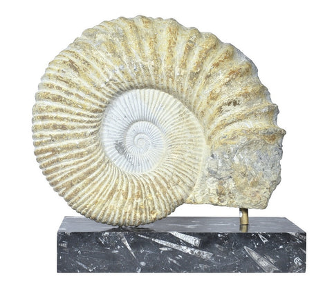 A Substantial Ammonite Fossil on Plinth