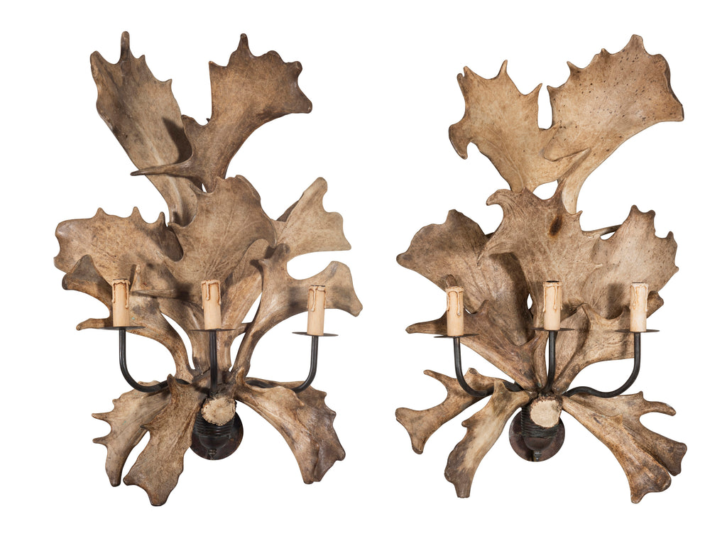 A Pair of Fallow Antler Sconces