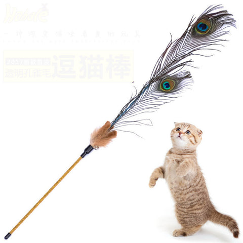 Teaser Feather for Cats