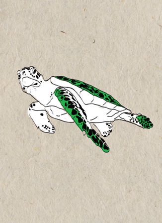 Turtle card - green/white