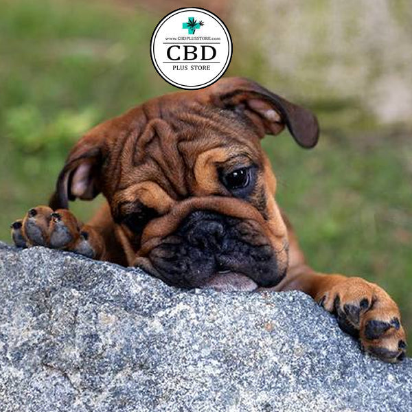 CBD Plus Store's Paws up! Hemp Oil Isn't Just For Humans