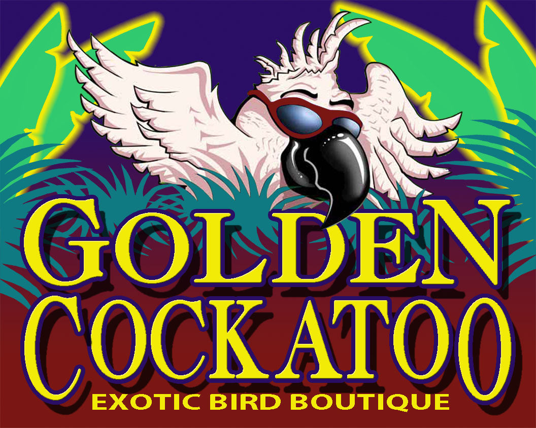 Golden Cockatoo