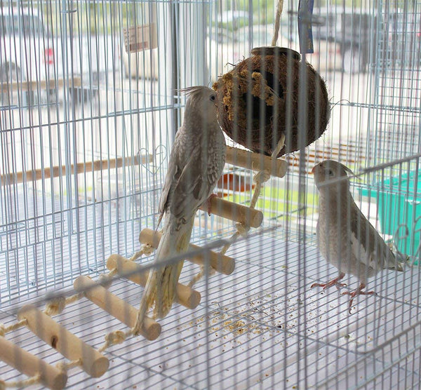Birds Love Coconut Shell Hut Home with Rope Ladder