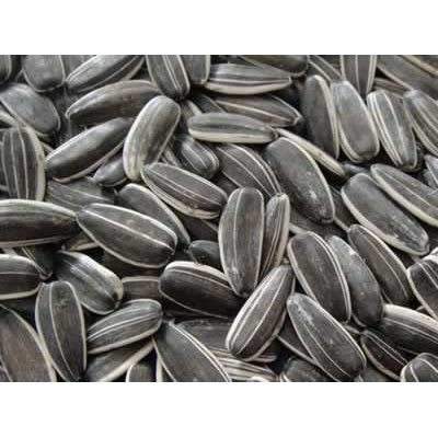 Volkman Black Stripe Sunflower Seeds, 2.5 lbs