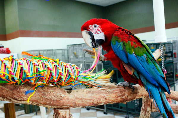 Birds LOVE Twisted Paper Tornado for Large Birds