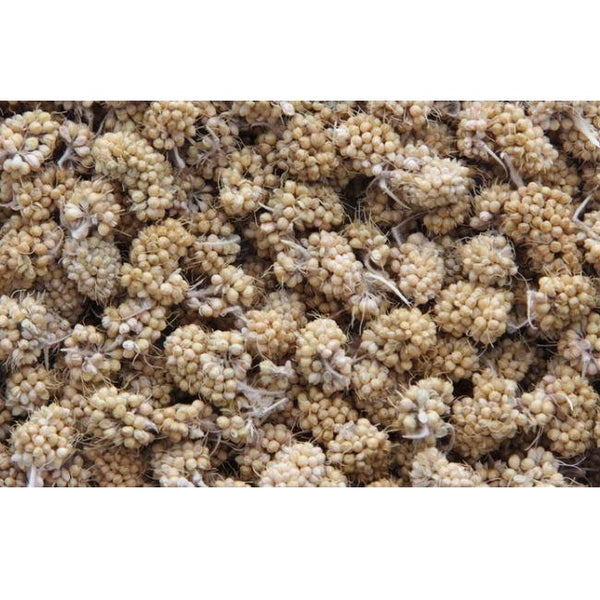 Higgins Sunburst Millet Bits Gourmet Treats for Small Birds, 1 oz