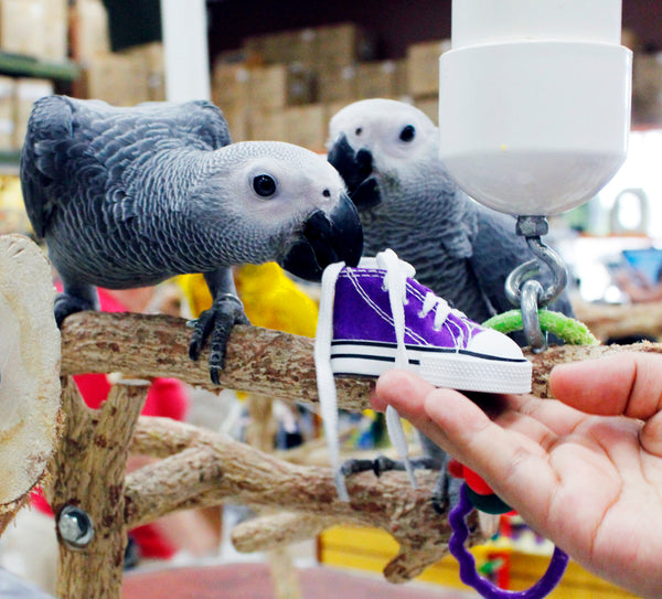 Birds LOVE Preening Sneakers Foot Toy, 6/pack