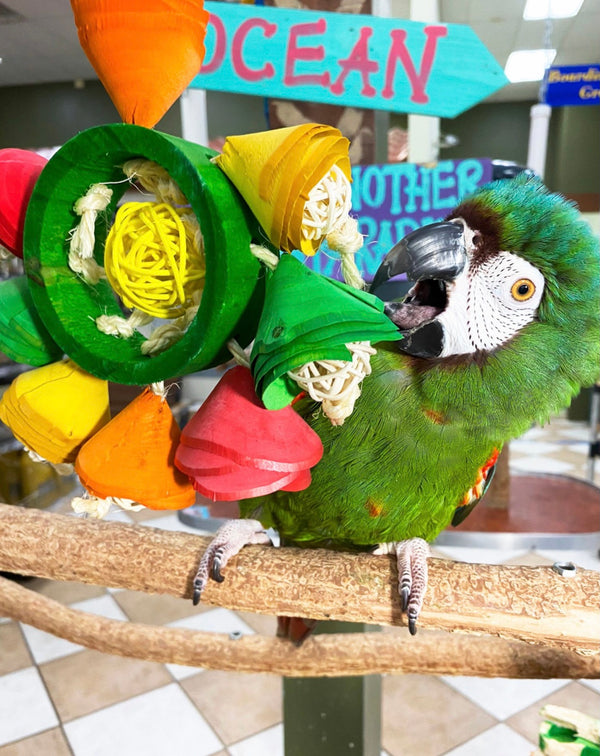 Birds LOVE Flower Crown Parrot Toy
