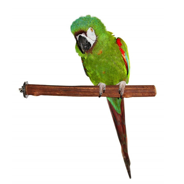 Birds Love Rattan Wood Perch, Medium