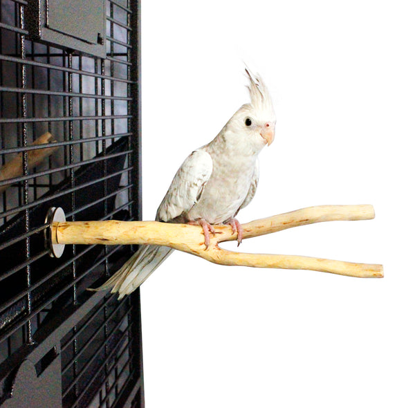 Birds LOVE Handcrafted Small Multi-branch Coffeewood Perch