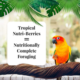 Lafeber's Gourmet Tropical Fruit Nutri-Berries for Conures 10-Ounce Bag - 10 oz - Conure