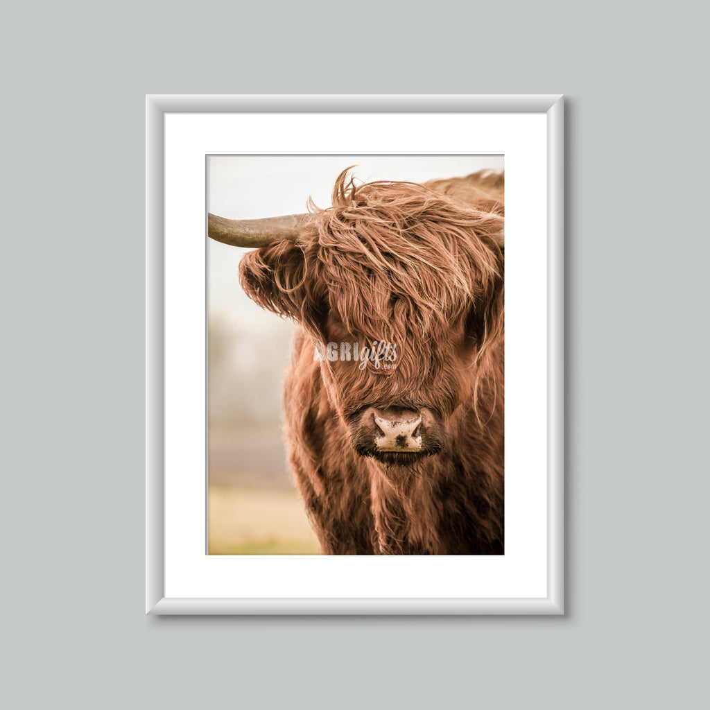 8x6 Mounted Print - Highland Cattle 'Ailin'